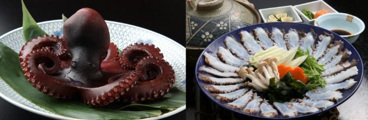日間賀島 蛸