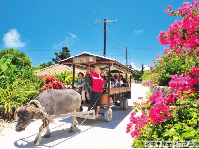 竹富島の水牛観光