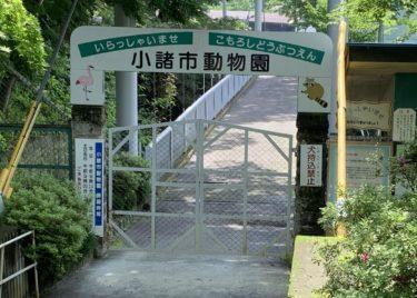 【昭和レトロ】ノスタルジーな雰囲気が逆に新しい小諸市動物園